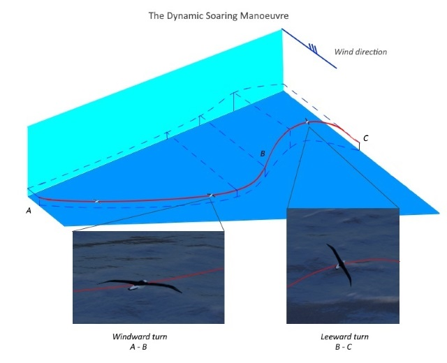 dynamic soaring perspective4